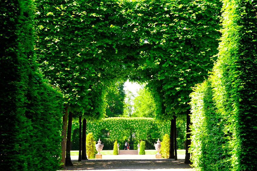 trimmed hedges